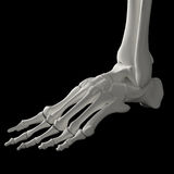 Skeleton foot Royalty Free Stock Image