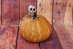 SKELETON FUNNY LAUGHING RISEN UP A PUMPKIN WITH   WOODEN  BOARDS BACKGROUND. Comical small skeleton cackling entered into a pumpkin in a horizontal image with a Stock Images