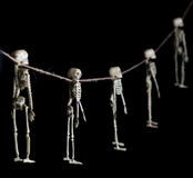 Skeleton Garland. Halloween decoration skeletons hanging from a rough string on pure black background Royalty Free Stock Photography