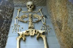 Skeleton in The Glass Tomb Stock Photography