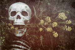 Skeleton in the Grass 7 Royalty Free Stock Photos