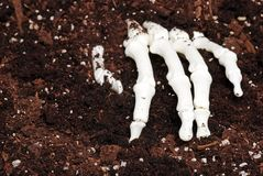 Skeleton hand in dirt. Making a background royalty free stock image