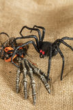 Skeleton Hand and Spider Royalty Free Stock Image