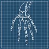 Skeleton hand vector. Sketch with hand bones  on white background. Skeleton hand vector. Hand drawn sketch  on white background Royalty Free Stock Photos