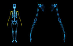 Skeleton hands Royalty Free Stock Photos