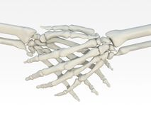 Skeleton handshake Royalty Free Stock Images