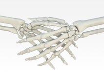 Skeleton handshake Royalty Free Stock Images