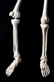 Skeleton hanged Royalty Free Stock Images