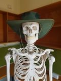 Skeleton in hat. Toothy grin skull stock images