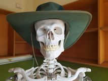 Skeleton in hat. Toothy grin skull stock image