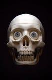 Skeleton head stock images