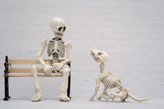 Skeleton and his skeleton dog Stock Images