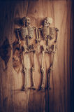 Skeleton holding hand for eternal love. Selective focus on hand Stock Images