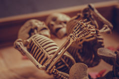 Skeleton holding hand for eternal love. Selective focus on hand Royalty Free Stock Images