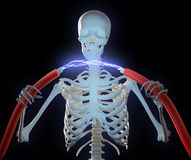 Skeleton holding high voltage cables Royalty Free Stock Image