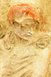 Skeleton of human archaeological find Royalty Free Stock Photography