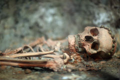Skeleton of human being. Archaeological find; skull and bones of human royalty free stock image
