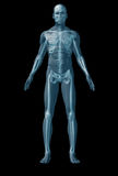 Skeleton human on black background Stock Images
