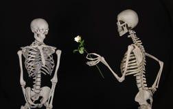 Skeleton, Human Body, Human, Organ stock photos
