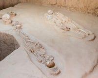 Skeleton human bones. Grave burial skeleton human bones Stock Photography