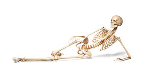 Skeleton of human female lying on floor. On white background. Clipping path included Stock Photo