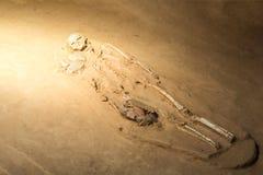 Skeleton human. Grave burial skeleton human bones Stock Photography