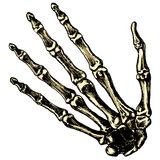 The skeleton human hand on a blank background stock illustration