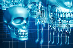 Skeleton and human Skull Royalty Free Stock Image