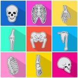 Skeleton Icons. Types of Bones on Bright Background Royalty Free Stock Photo