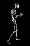Skeleton Illustration Lizenzfreies Stockbild