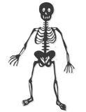 Skeleton vector stock image