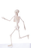 Skeleton isolated Stock Photo