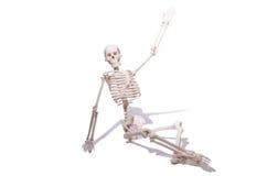 Skeleton isolated Stock Photo