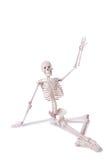 Skeleton isolated Royalty Free Stock Photos