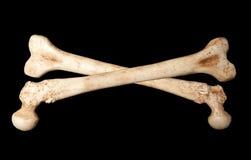 Skeleton Knochen Stockbild