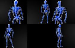 Skeleton Knochen Stockfoto