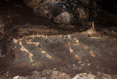 Skeleton of large animal lying on the ground in cave. Stock Image