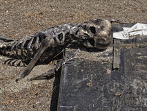 Skeleton laying on koffin Royalty Free Stock Photography