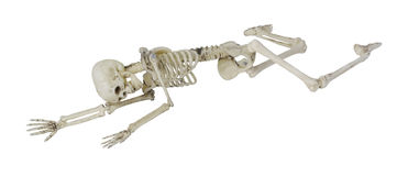 Skeleton Laying Partially Prone and Sideways Royalty Free Stock Photos