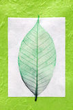 Skeleton leaf. Green skeleton leaf on handmade paper Stock Image
