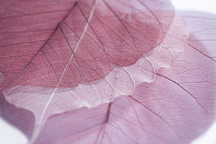 Skeleton of leaf Stock Photos