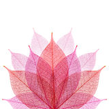 Skeleton leaf abstract background Stock Photography
