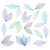 Skeleton leaf abstract background Royalty Free Stock Image