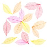 Skeleton leaf abstract background Royalty Free Stock Photography