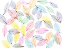 Skeleton leaf abstract background Royalty Free Stock Images