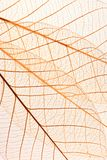 Skeleton leaf background Stock Image