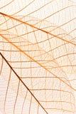 Skeleton leaf background stock image