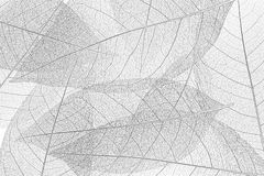 Skeleton leaf background Stock Images