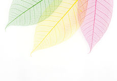 Skeleton leaf background Royalty Free Stock Photos