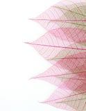 Skeleton leaf background Stock Photography